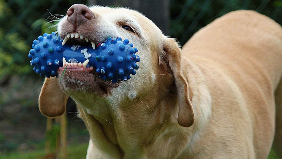Benefits-of-Dog-Toys-&-Safety-Tips-on-SelfGrowth